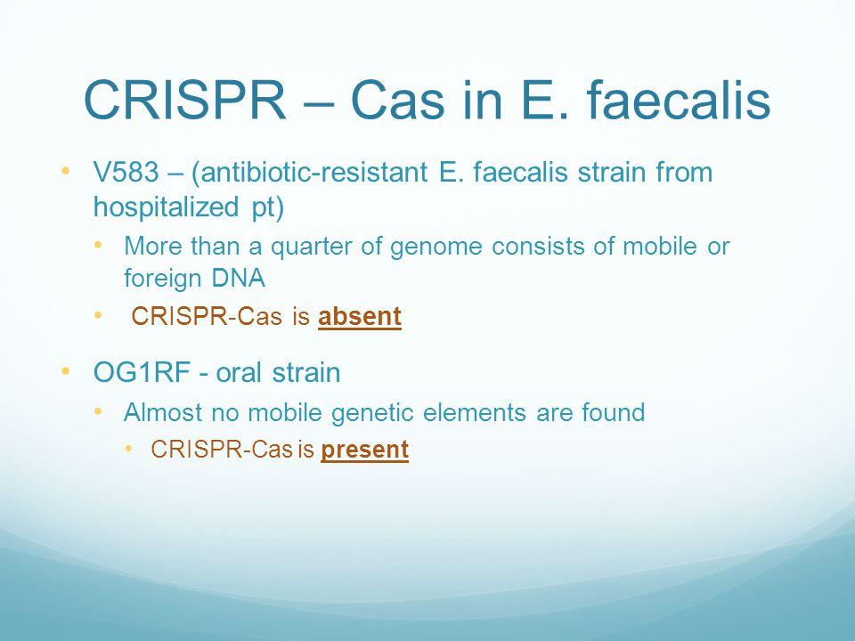 CRISPR – Cas in E. faecalis V583 – (antibiotic-resistant E.
