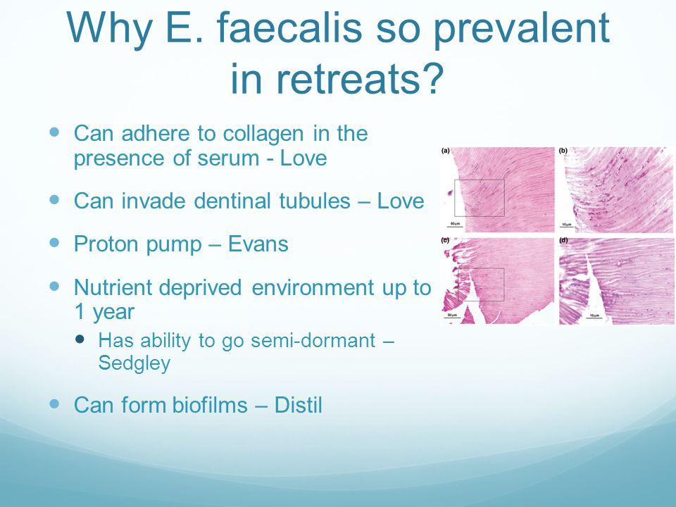 Why E. faecalis so prevalent in retreats.