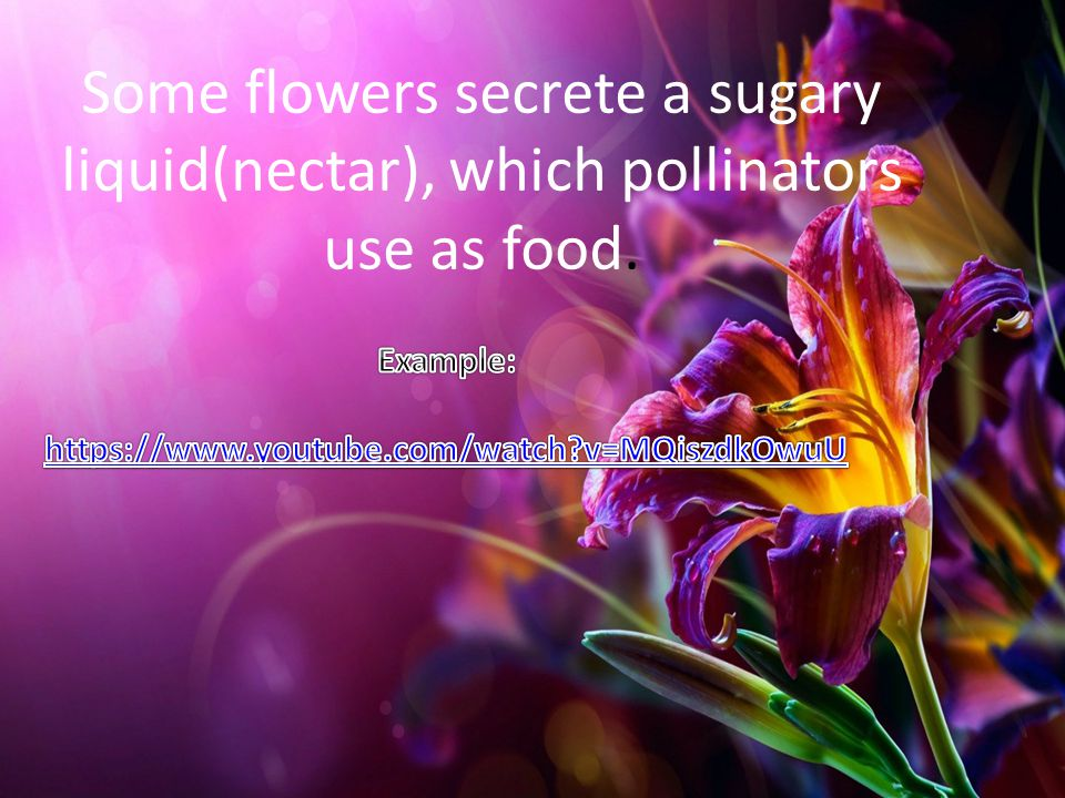 Some flowers secrete a sugary liquid(nectar), which pollinators use as food.