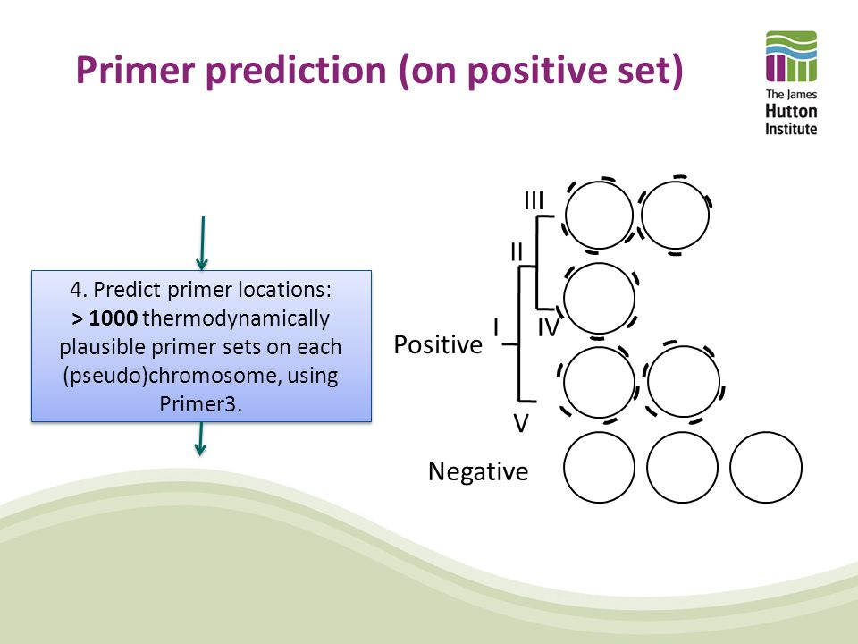Primer prediction (on positive set) Positive Negative III II IV V I 4. Predict primer locations: > 1000 thermodynamically plausible primer sets on eac