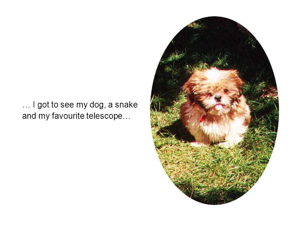 … I got to see my dog, a snake and my favourite telescope…