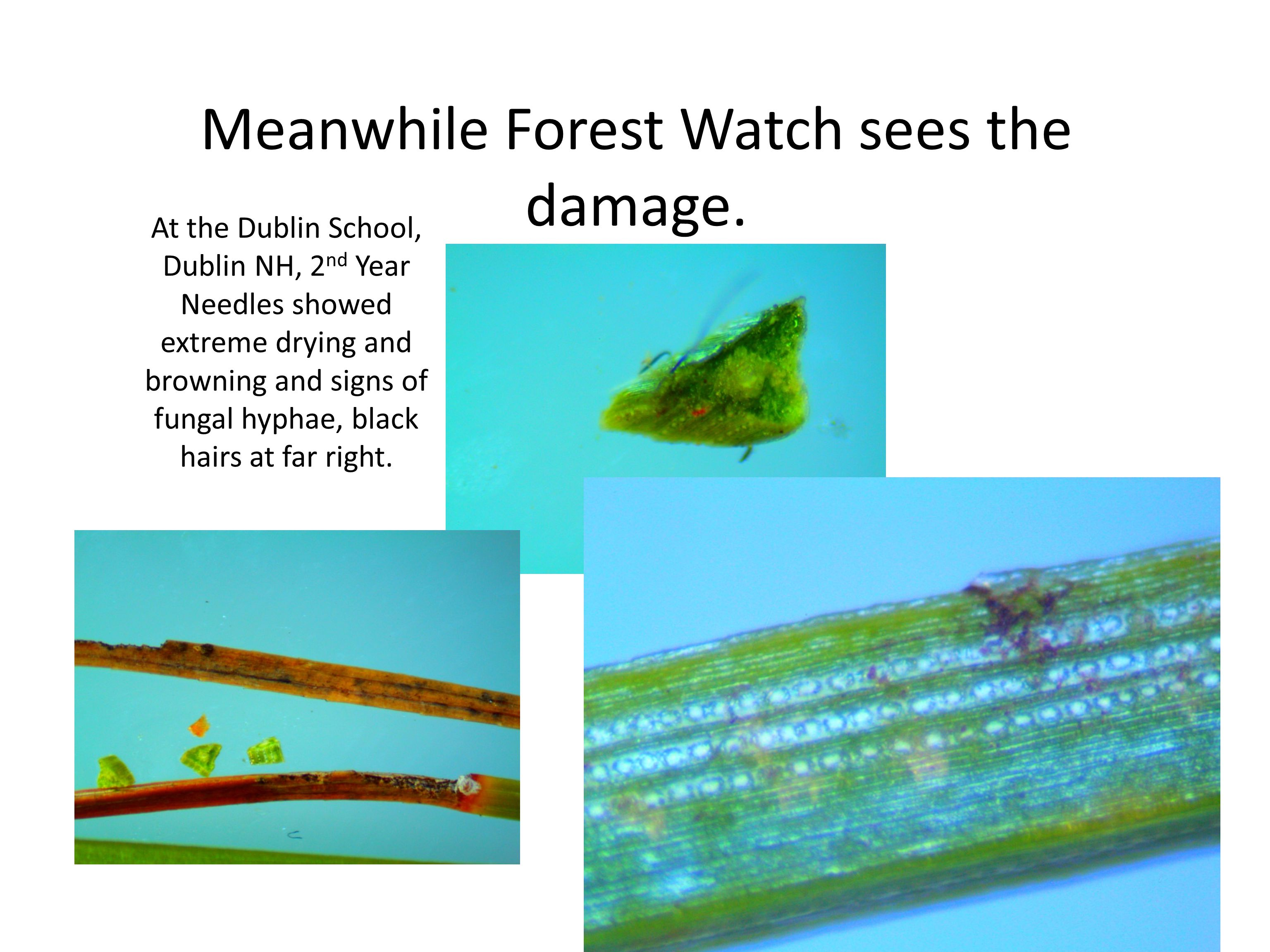 Meanwhile Forest Watch sees the damage.