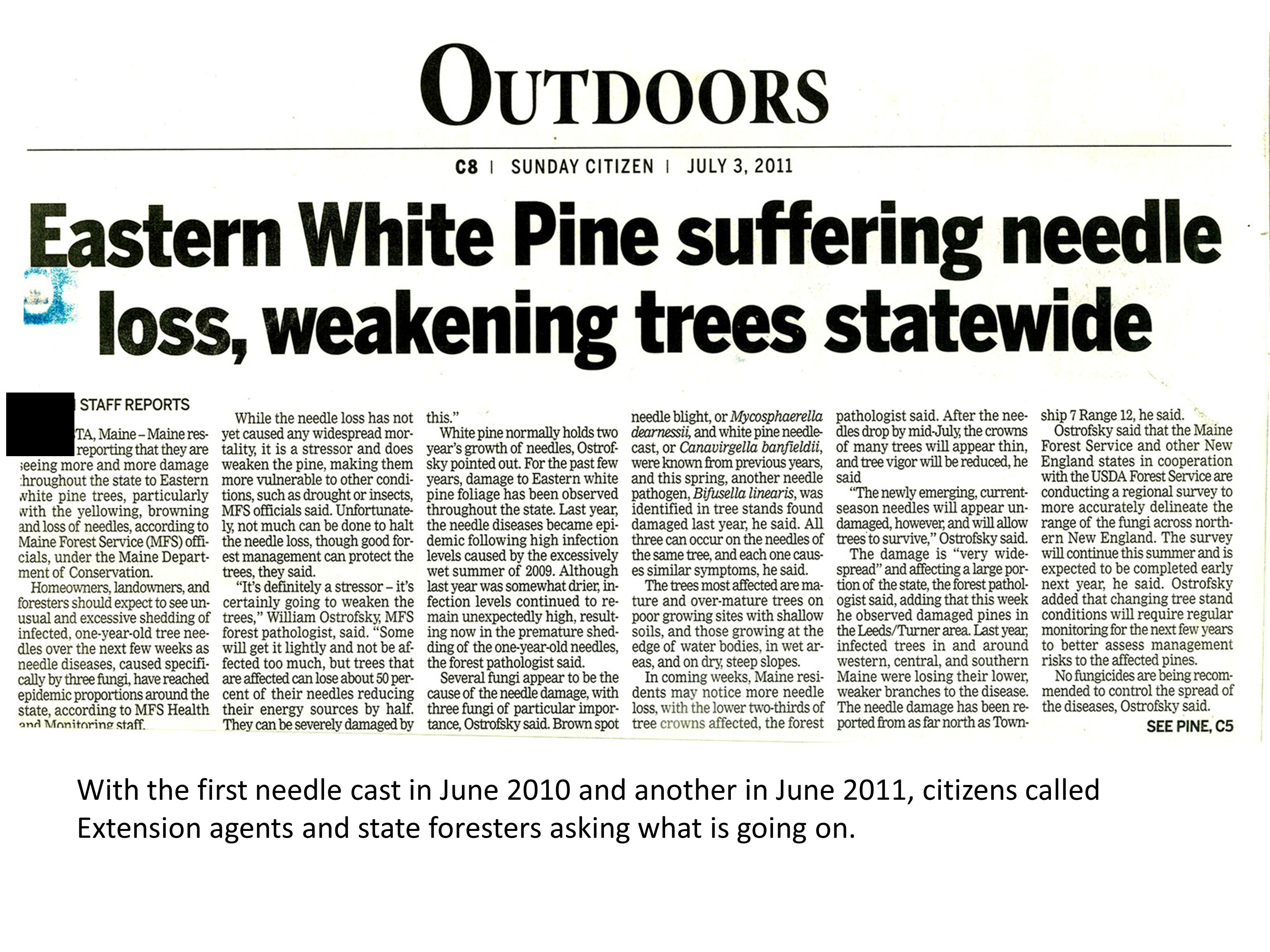 Even in 2010, Extension foresters and state pathologists identified fungi as a probable cause of heavy needle cast.