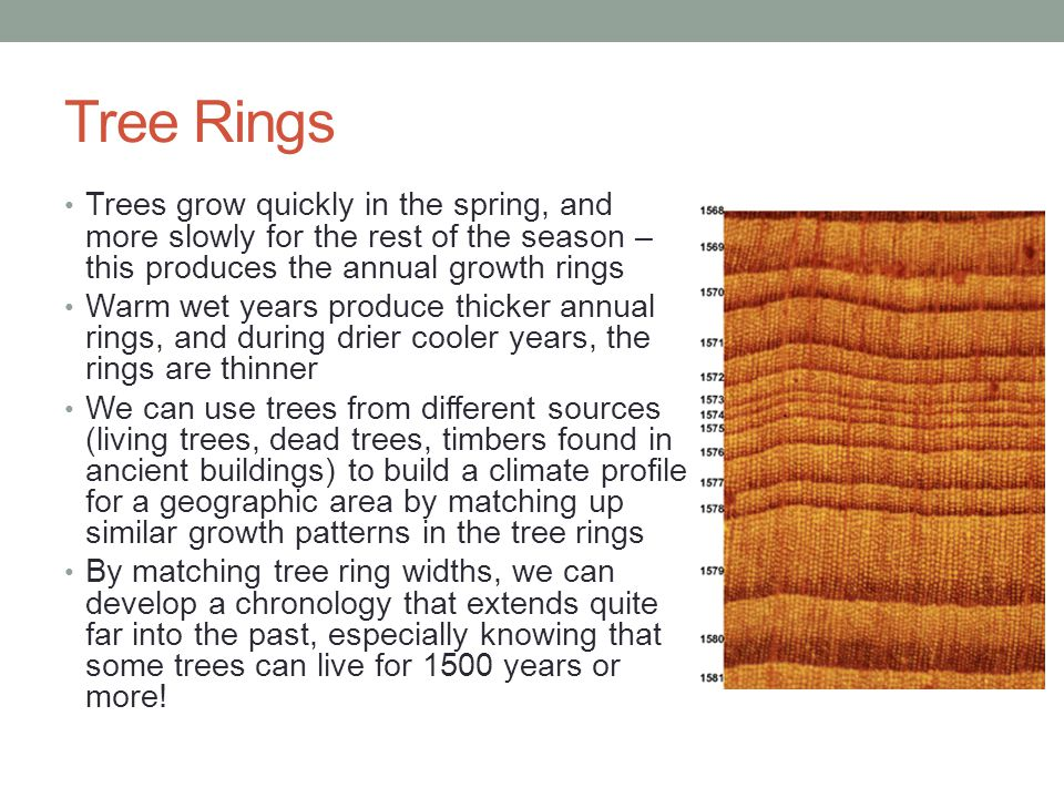 Tree Rings Trees grow quickly in the spring, and more slowly for the rest of the season – this produces the annual growth rings Warm wet years produce thicker annual rings, and during drier cooler years, the rings are thinner We can use trees from different sources (living trees, dead trees, timbers found in ancient buildings) to build a climate profile for a geographic area by matching up similar growth patterns in the tree rings By matching tree ring widths, we can develop a chronology that extends quite far into the past, especially knowing that some trees can live for 1500 years or more!