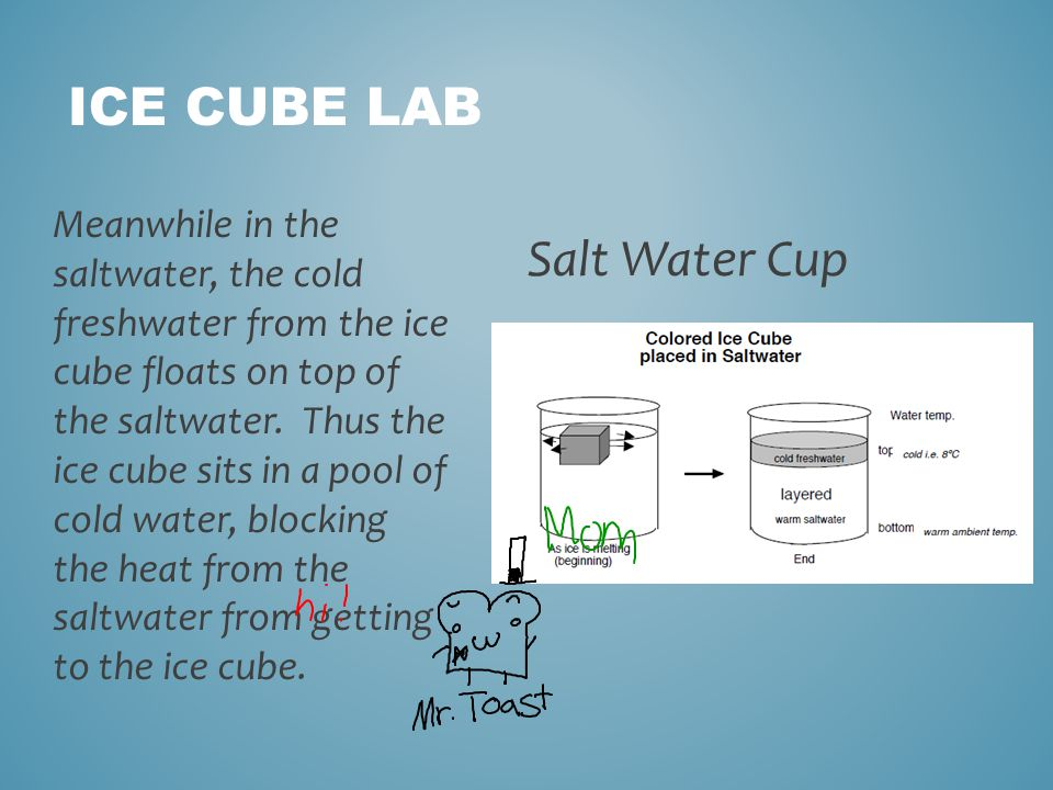 ICE CUBE LAB Salt Water Cup Meanwhile in the saltwater, the cold freshwater from the ice cube floats on top of the saltwater.