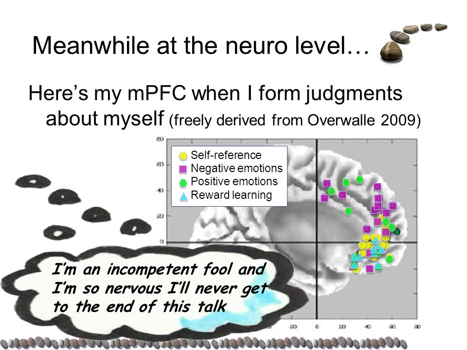 Self-reference Negative emotions Positive emotions Reward learning Meanwhile at the neuro level… Here's my mPFC when I form judgments about myself (freely derived from Overwalle 2009) I'll bet my brain images and animations will make them think I know my stuff.