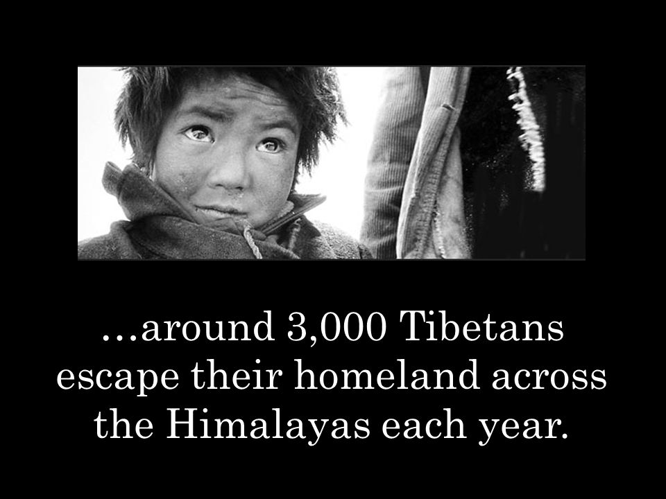 …around 3,000 Tibetans escape their homeland across the Himalayas each year.