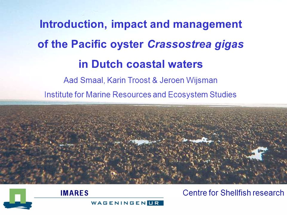 Centre for Shellfish research Introduction, impact and management of the Pacific oyster Crassostrea gigas in Dutch coastal waters Aad Smaal, Karin Troost & Jeroen Wijsman Institute for Marine Resources and Ecosystem Studies