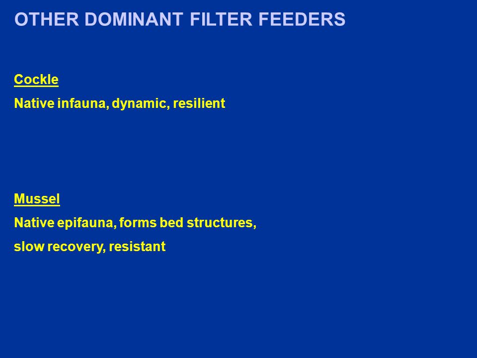 OTHER DOMINANT FILTER FEEDERS Cockle Native infauna, dynamic, resilient Mussel Native epifauna, forms bed structures, slow recovery, resistant