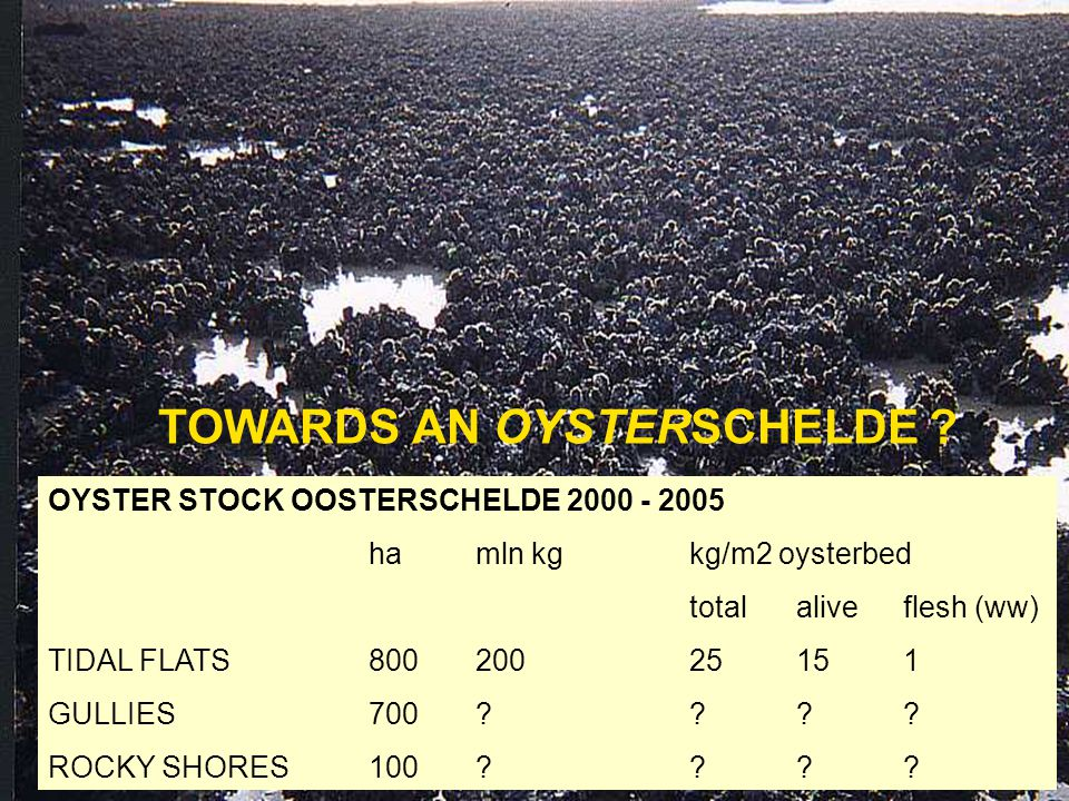 SPACE: - Oysters settle on mussel and cockle beds - Oysters settle in subtidal areas including mussel culture plots - Oysters take over rocky shore fauna on average > 60 % coverage - Oysters form new habitat (reefs) on tidal flats
