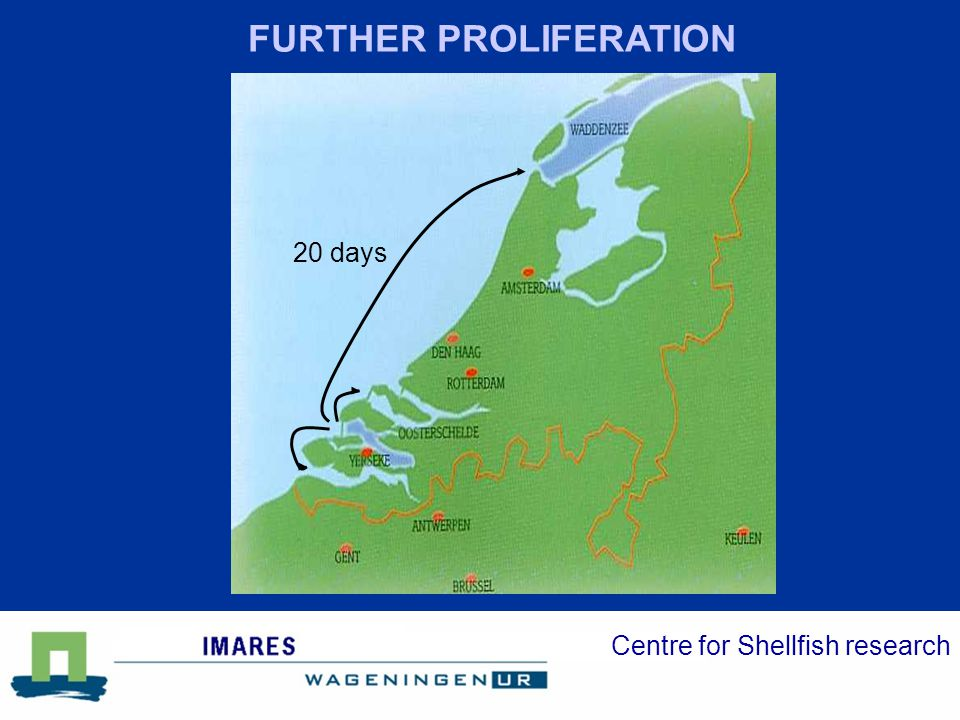 Centre for Shellfish research Biomass Surface N obs *10^6 kg Ha 2002:0.1 n.d.4 20030.15 n.d.4 2004: 11 40040 2005: 28 55087 OYSTERS WADDEN SEA 2005