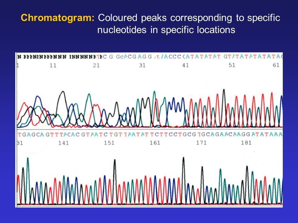 Chromatogram: Coloured peaks corresponding to specific nucleotides in specific locations
