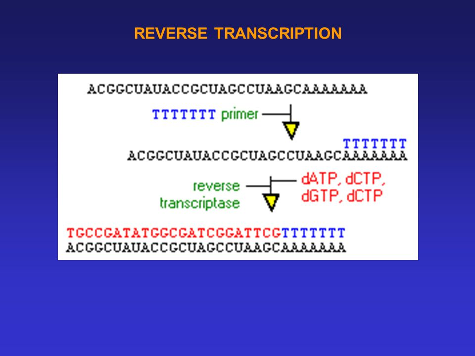 REVERSE TRANSCRIPTION