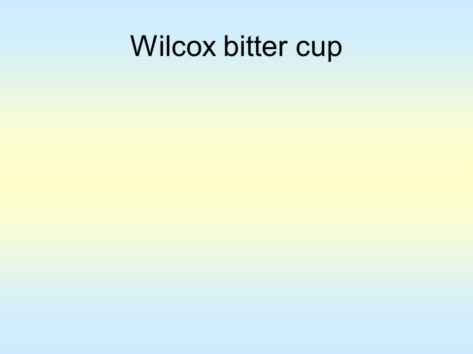 Wilcox bitter cup