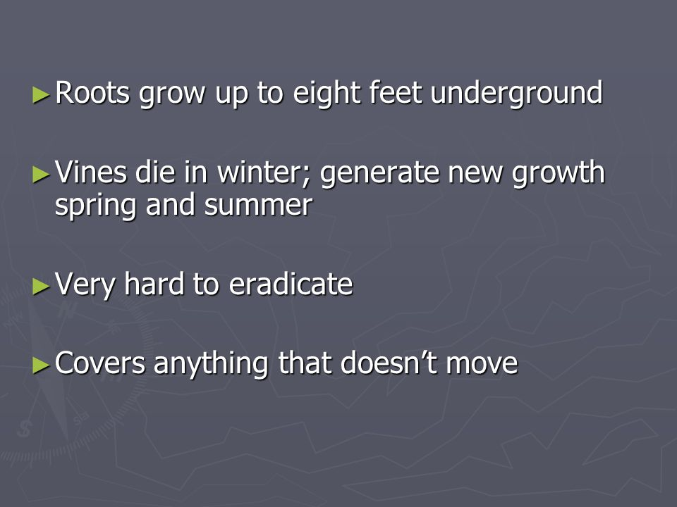 ► Roots grow up to eight feet underground ► Vines die in winter; generate new growth spring and summer ► Very hard to eradicate ► Covers anything that doesn't move