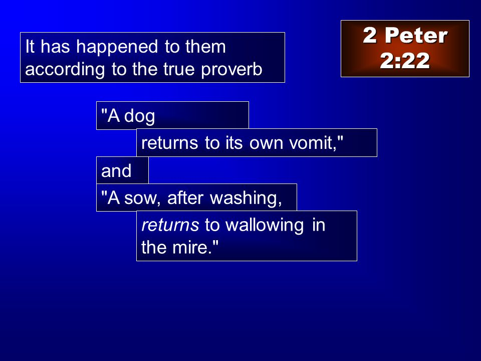2 Peter 2:22 It has happened to them according to the true proverb and A sow, after washing, A dog returns to its own vomit, returns to wallowing in the mire.