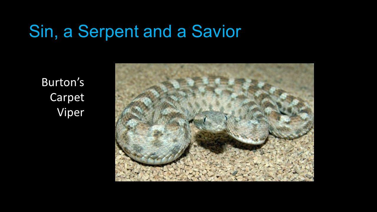 Sin, a Serpent and a Savior Burton's Carpet Viper