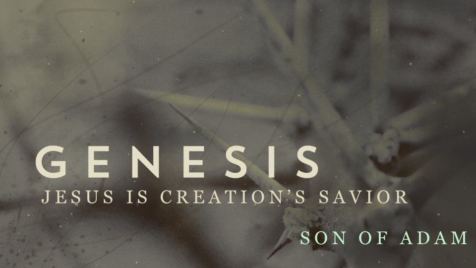 JESUS IS CREATION'S SAVIOR SON OF ABRAHAM