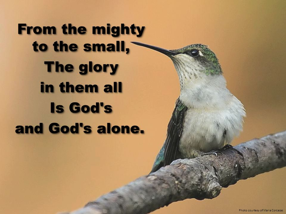 From the mighty to the small, The glory in them all Is God s and God s alone.