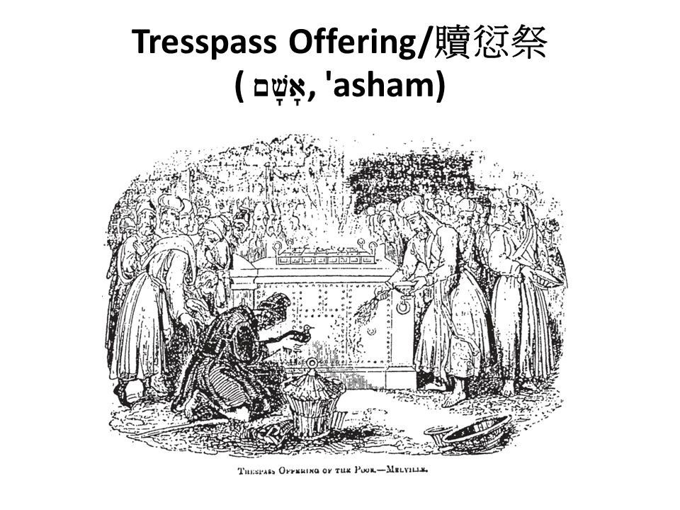 Tresspass Offering/ 贖愆祭 ( ~v a , asham)