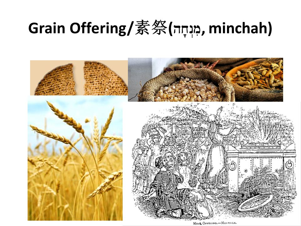 Grain Offering/ 素祭 ( hx n>mi, minchah)