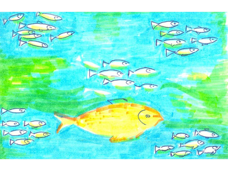 The small fishes gathered in groups of 6 or 7 to benefit from the light emitted at the passage of Iktus.