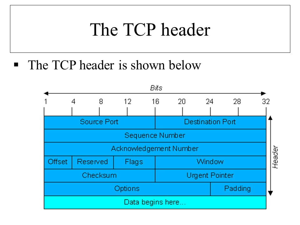 The TCP header  The TCP header is shown below
