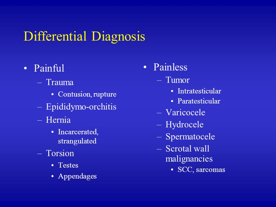 Differential Diagnosis Painful –Trauma Contusion, rupture –Epididymo-orchitis –Hernia Incarcerated, strangulated –Torsion Testes Appendages Painless –Tumor Intratesticular Paratesticular –Varicocele –Hydrocele –Spermatocele –Scrotal wall malignancies SCC, sarcomas