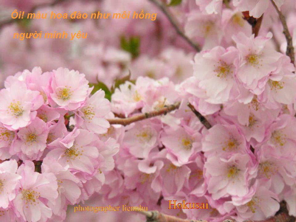 Ôi! màu hoa đào, màu hoa đào chiều xuân nào