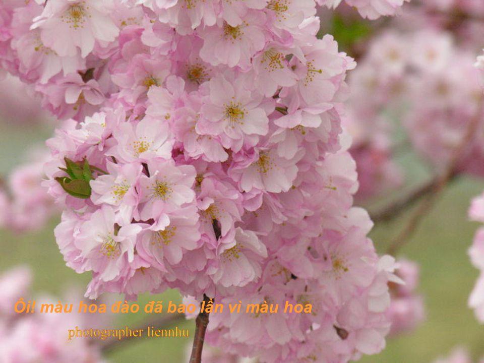 Ôi! màu hoa đào như môi hồng người mình yêu