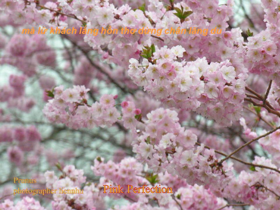 Ôi! màu hoa đào đã bao lần vì màu hoa