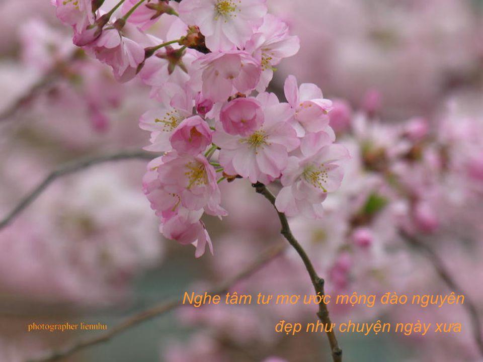Thông reo bên suối vắng, lời dìu dặt như tiếng tơ, Xuân đi trong mắt biếc lòng dạt dào nên ý thơ