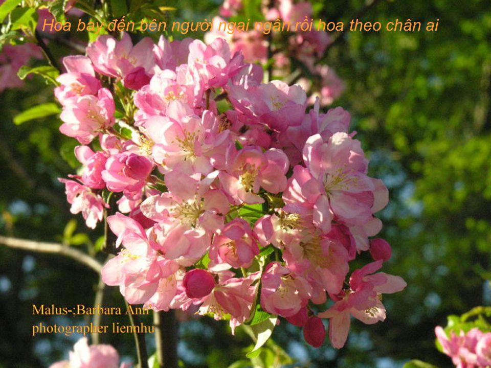 Ai lên xứ hoa đào đừng quên bước lần theo đường hoa