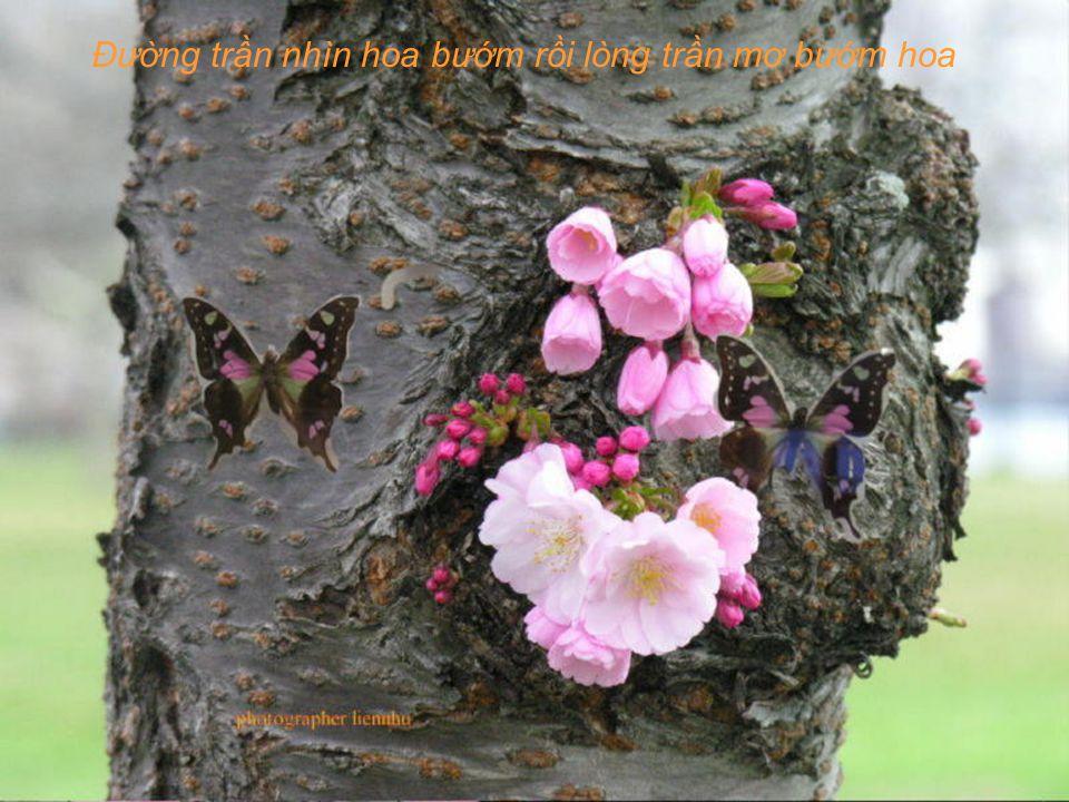 Hoa bay đến bên người ngại ngần rồi hoa theo chân ai