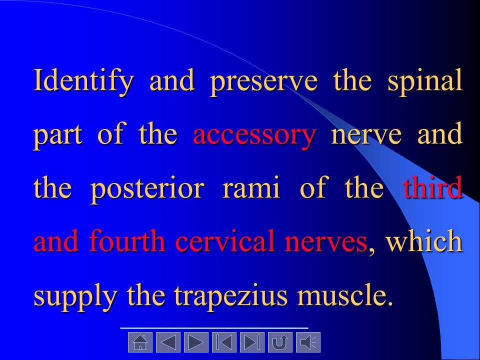 Cut free the origin of the trapezius from the skull, the ligamentum nuchae, and the spinous processes of the vertebrae. Carefully reflect the trapeziu