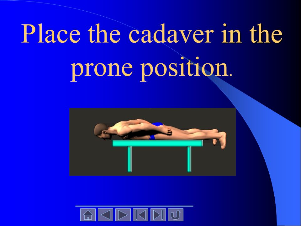 in the Place the cadaver in the prone position.