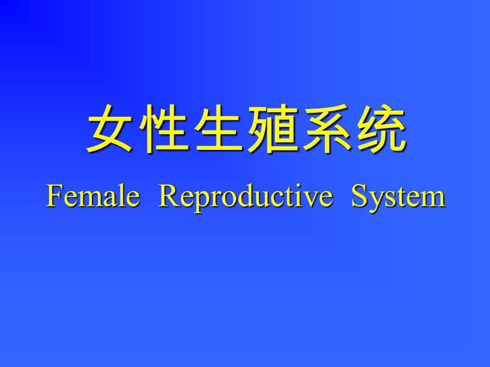 女性生殖系统 Female Reproductive System