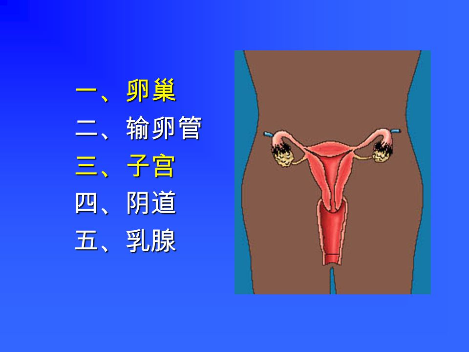 女性生殖系统 Female Reproductive System