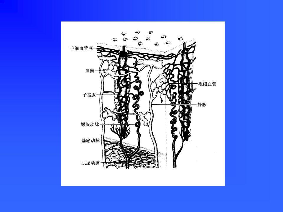 子宫壁的结构