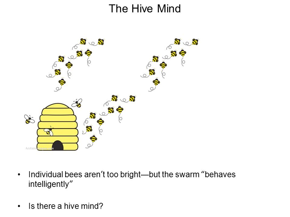 """The Hive Mind Individual bees aren't too bright—but the swarm """"behaves intelligently"""" Is there a hive mind?"""