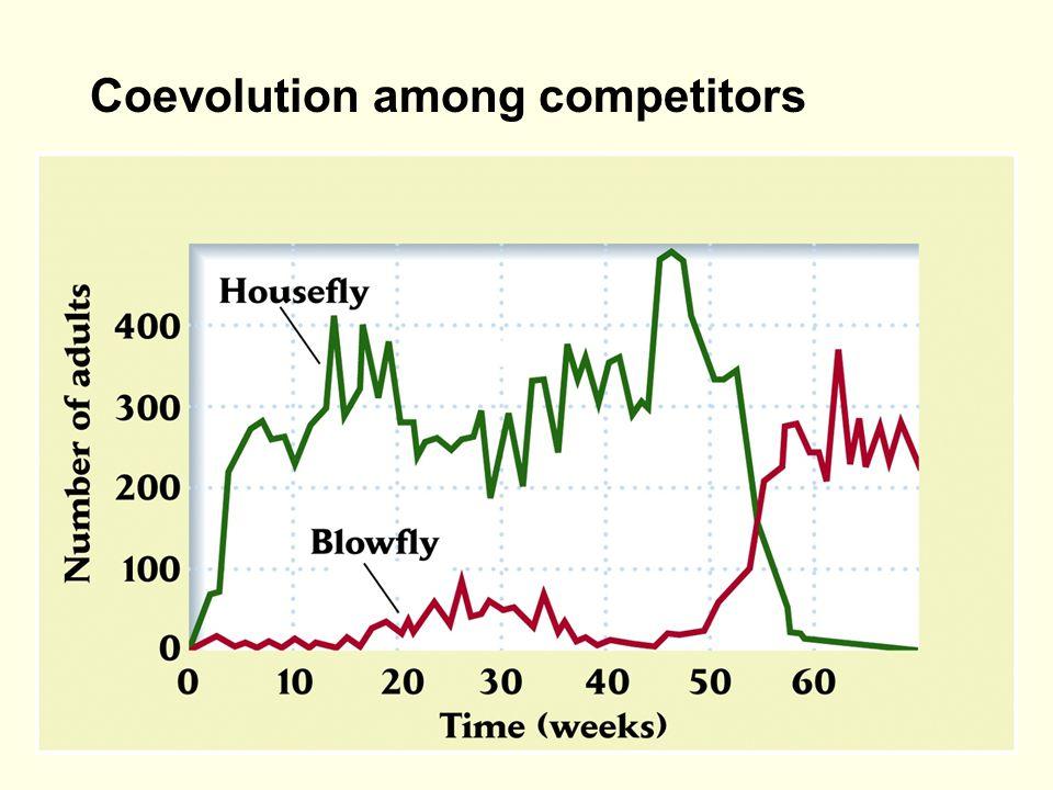 Coevolution among competitors