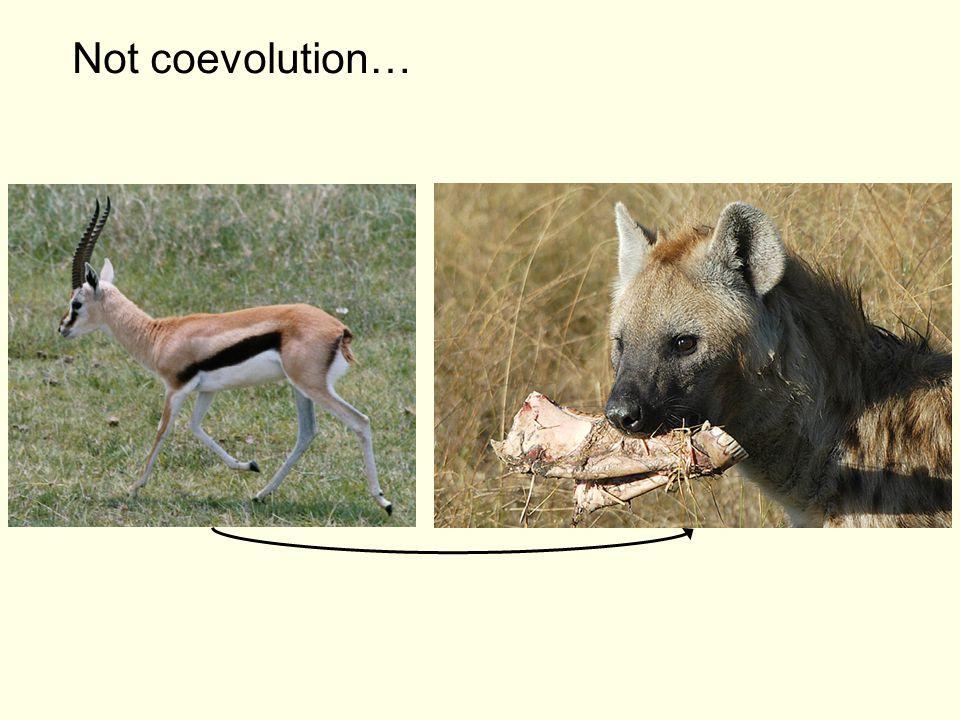 Not coevolution…