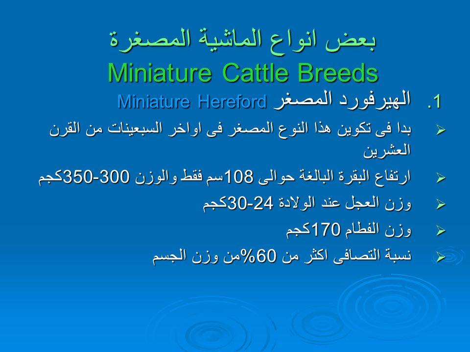 بعض انواع الماشية المصغرة Miniature Cattle Breeds بعض انواع الماشية المصغرة Miniature Cattle Breeds 1.