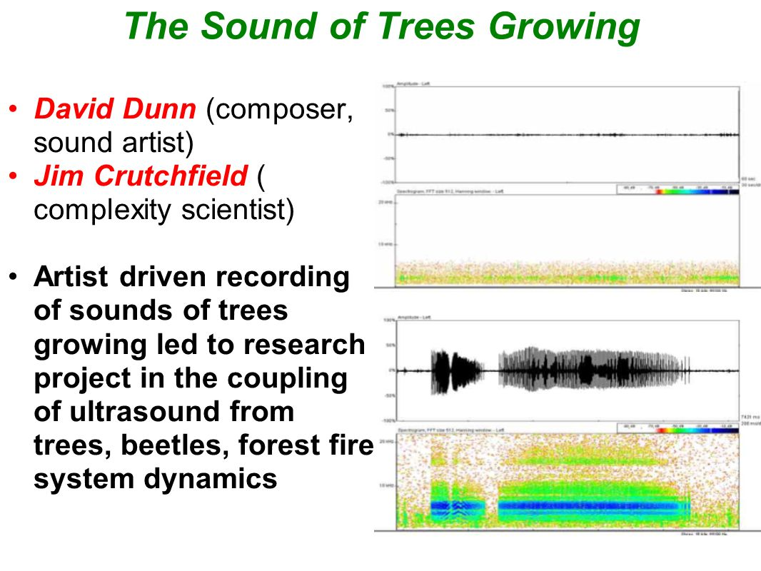 The Sound of Trees Growing David Dunn (composer, sound artist) Jim Crutchfield ( complexity scientist) Artist driven recording of sounds of trees growing led to research project in the coupling of ultrasound from trees, beetles, forest fire system dynamics