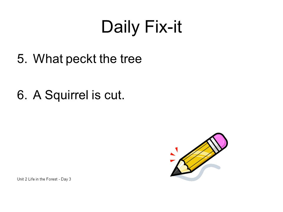 Daily Fix-it 5.What peckt the tree 6.A Squirrel is cut. Unit 2 Life in the Forest - Day 3