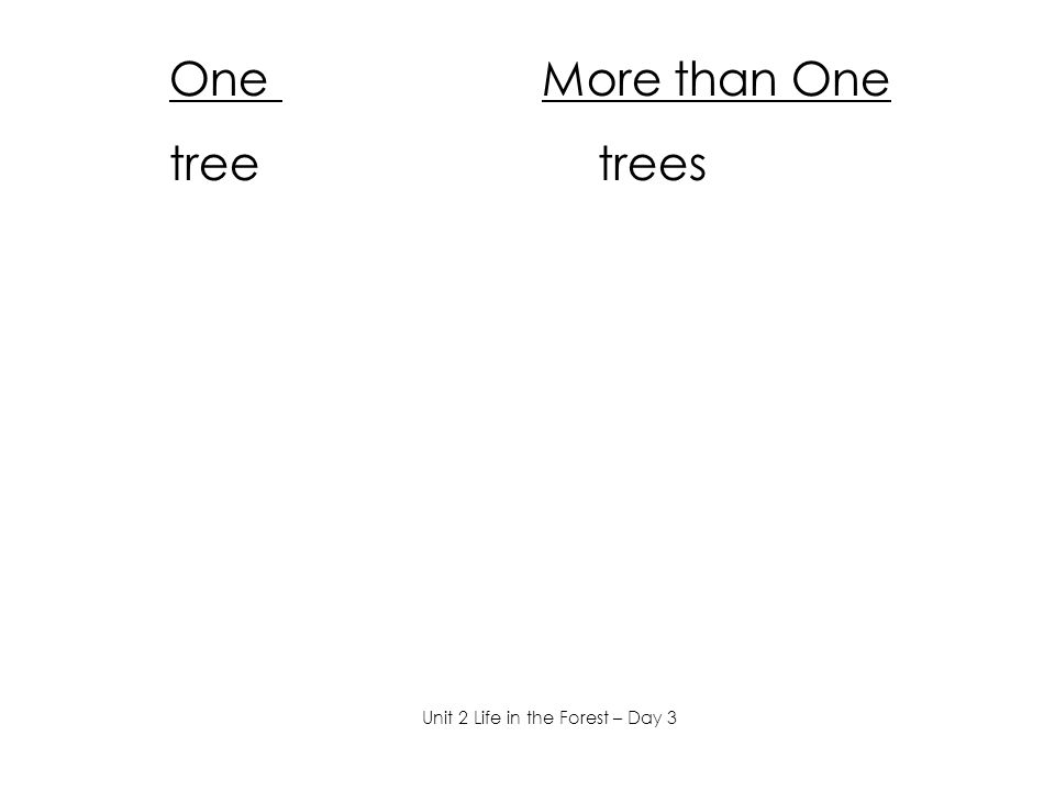 One More than One tree trees Unit 2 Life in the Forest – Day 3