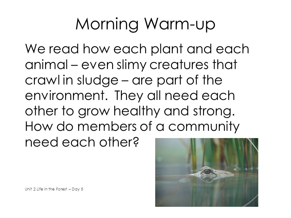 Morning Warm-up We read how each plant and each animal – even slimy creatures that crawl in sludge – are part of the environment. They all need each o