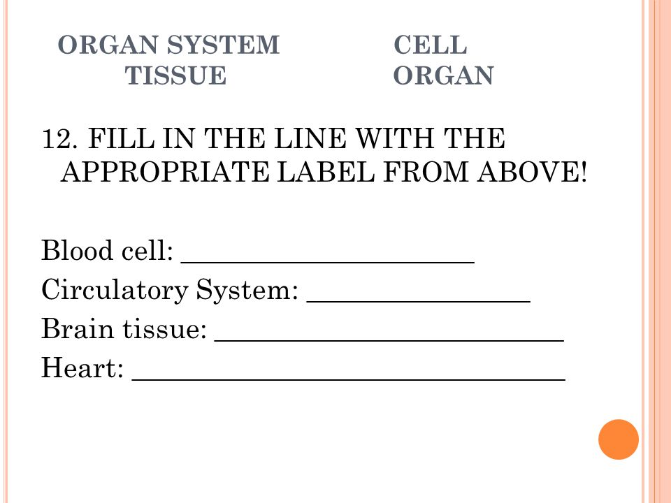 ORGAN SYSTEMCELL TISSUEORGAN 12. FILL IN THE LINE WITH THE APPROPRIATE LABEL FROM ABOVE! Blood cell: _____________________ Circulatory System: _______