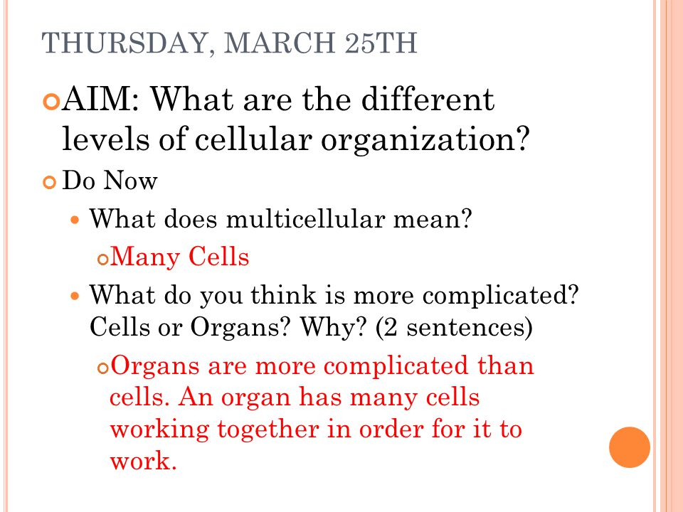THURSDAY, MARCH 25TH AIM: What are the different levels of cellular organization? Do Now What does multicellular mean? Many Cells What do you think is