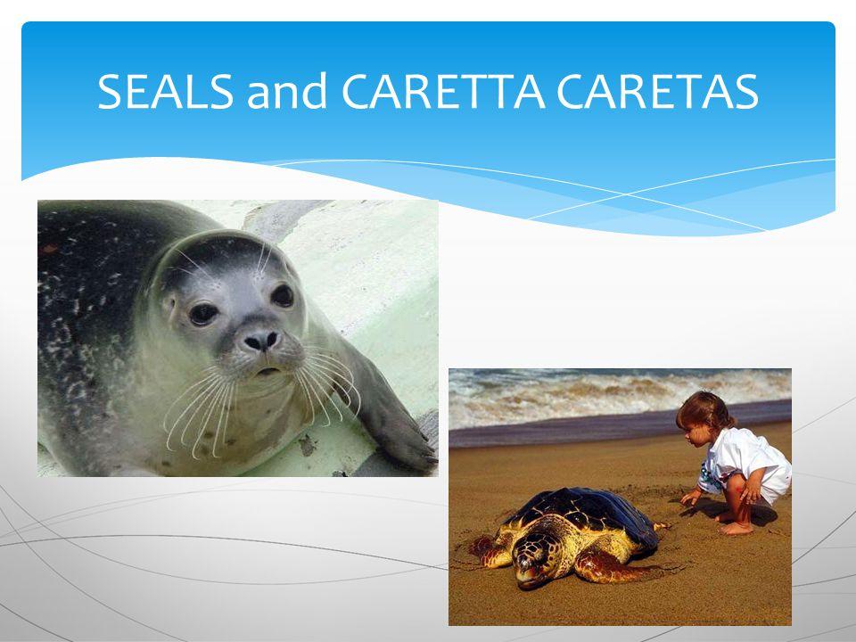 SEALS and CARETTA CARETAS